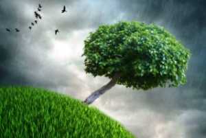 pluja 000 ocells herba arbre tort
